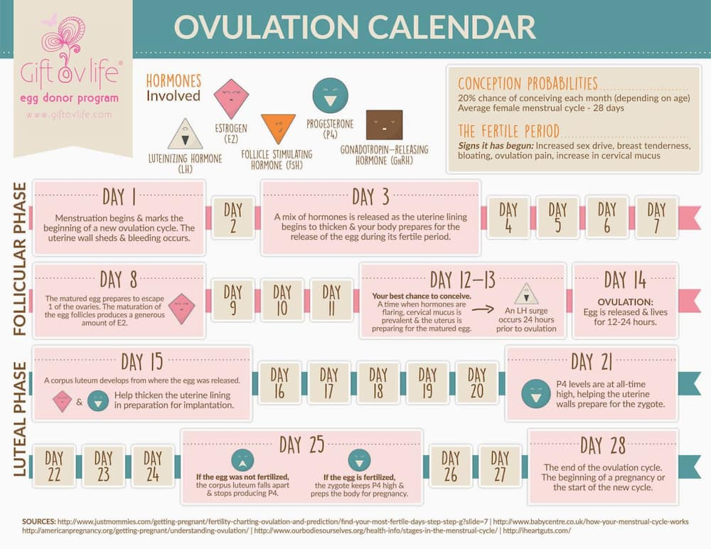How long does ovulation last