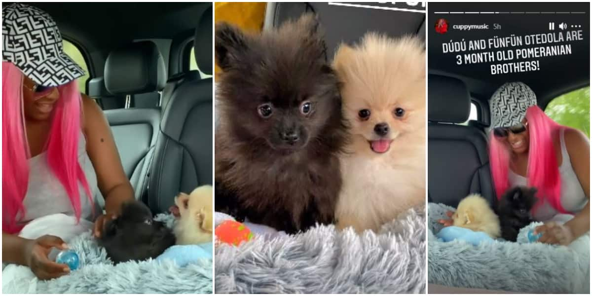 Dye Them Pink: Reactions as DJ Cuppy Shows Off Her New Dogs, Dudu and Funfun Otedola