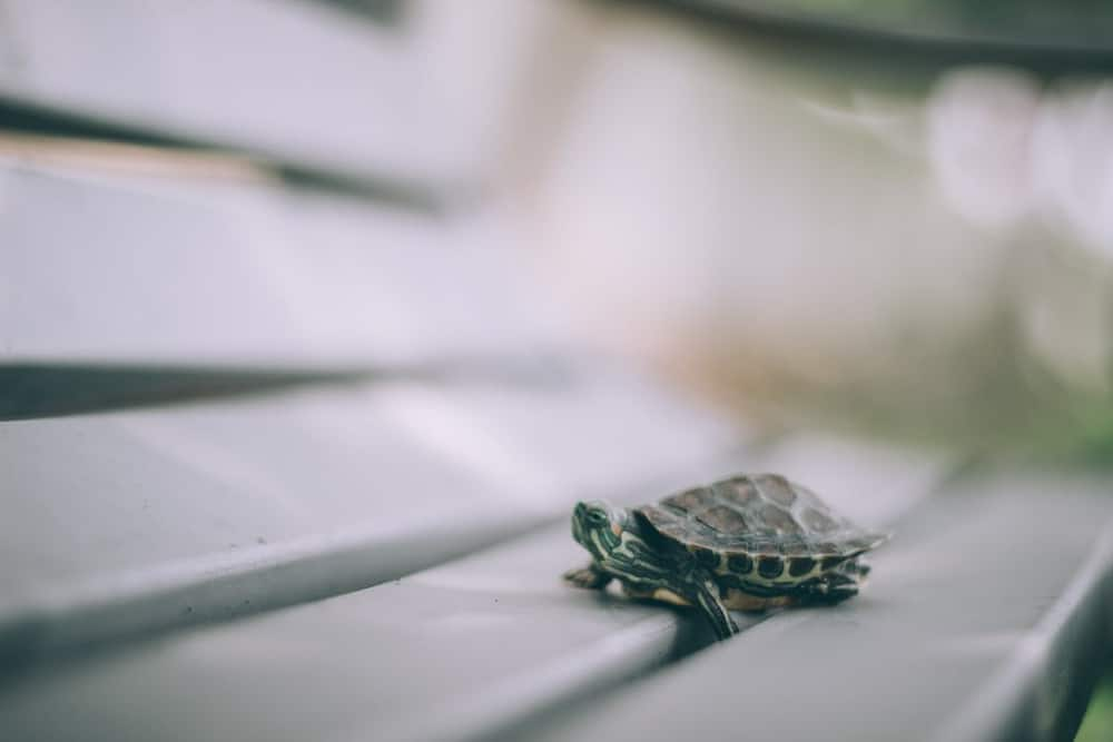 baby turtle names