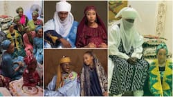 It looks like Zee world: Nigerians react to Yusuf Buhari's pre-wedding video, photos from henna party