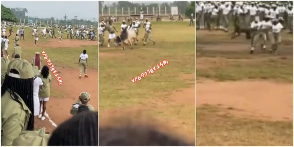 Corps members and soldiers could be seen chasing a marauding cow around a field
