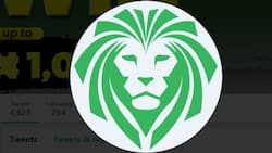 All you need to know about the betting site, Lionsbet