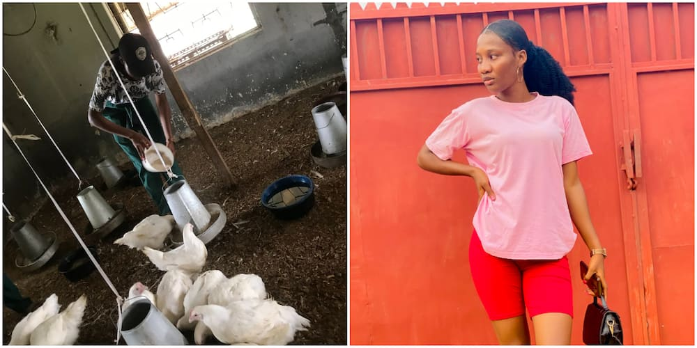 Beautiful Nigerian Lady Showcases Her Hustle as a Chicken Farmer Without Shame, Photos Cause Huge Stir