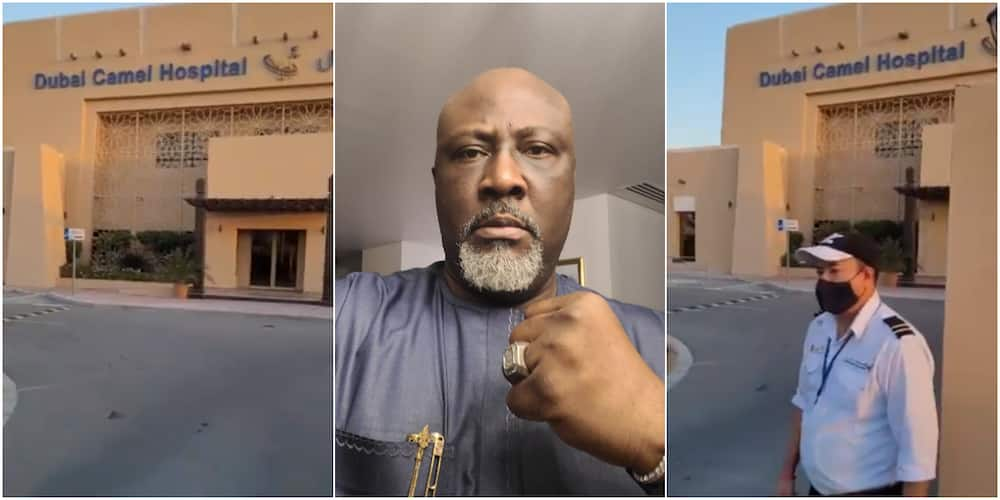 Dino Melaye expresses surprise at seeing hospital for camels in Dubai, many react as ex-lawmaker shares video