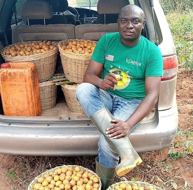 Man shows off massive Agbalumo he harvested from trees he did not plant, Nigerians want a taste of it