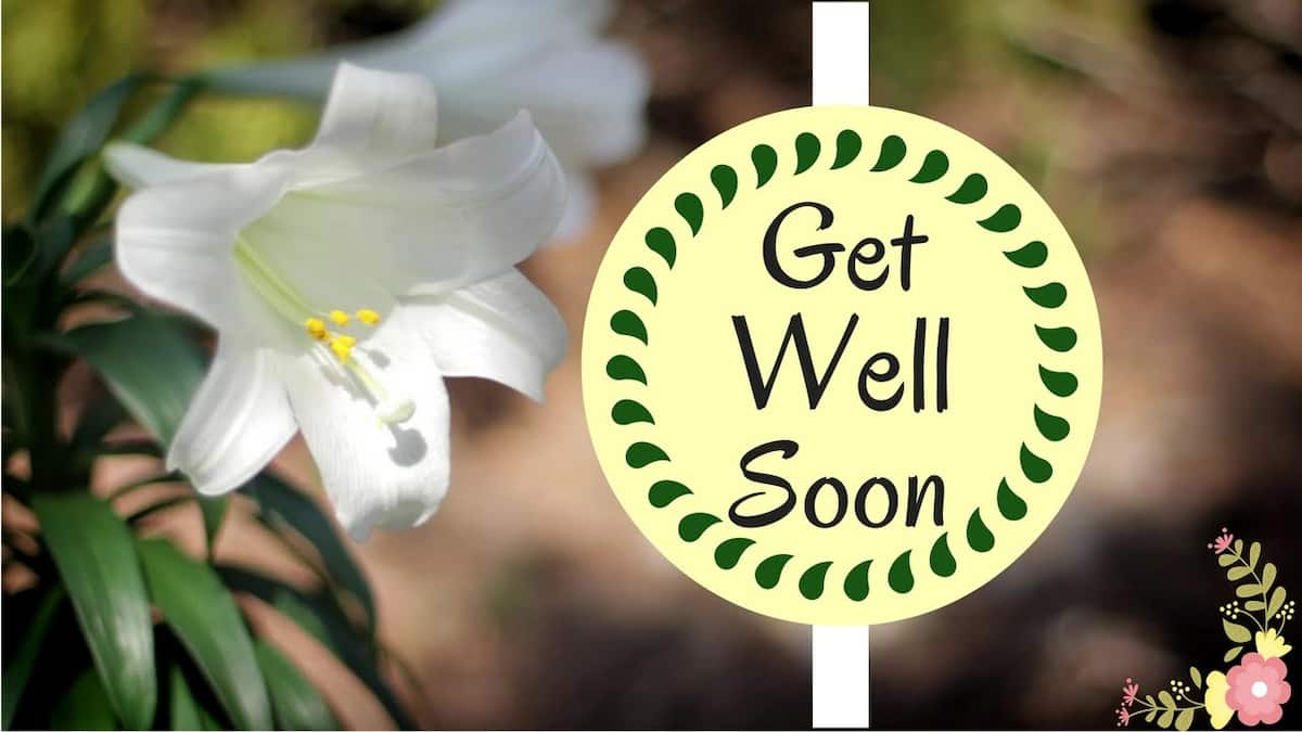 Best Get Well Soon Messages For Him Legit Ng