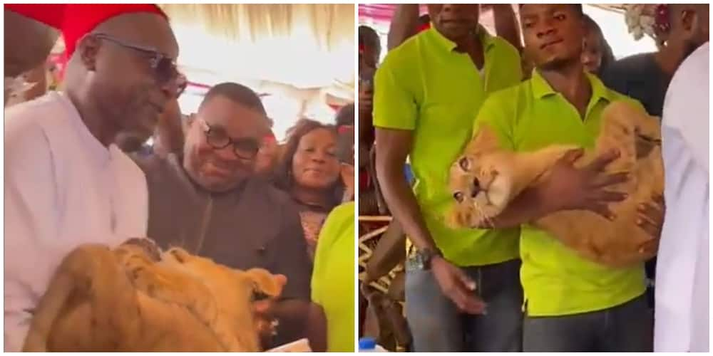Seun Kuti reacts to viral video of man who attended event with pet lion