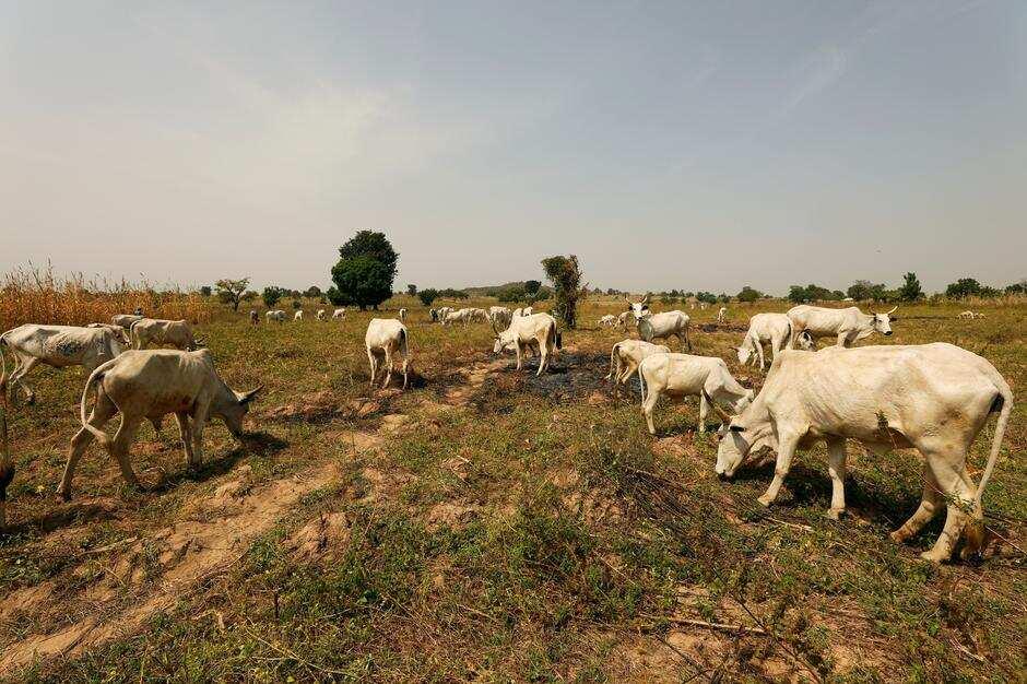 Herdsmen/farmers crisis: New report highlights successes