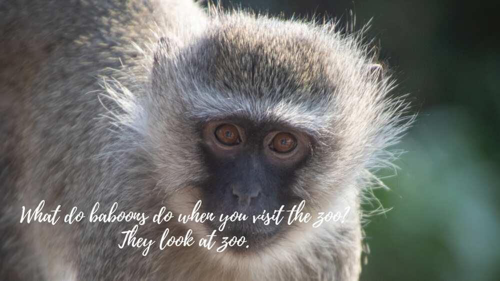 Zoo puns