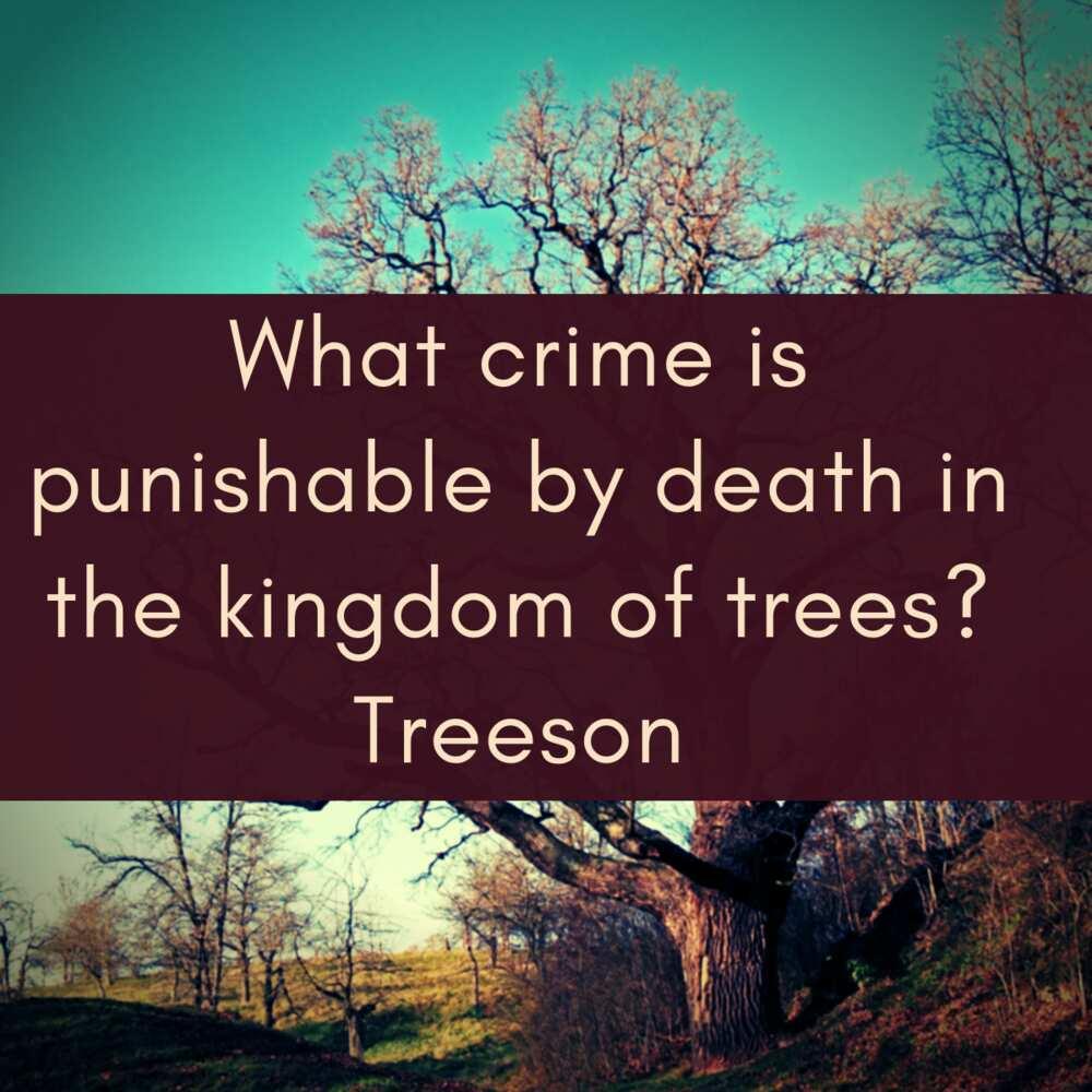 tree jokes