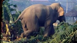 Tear, tragedy as farmer with 3 wives & 13 kids dies after battling with elephant