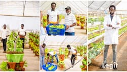 Crops grown in the air are more healthier, Nigerian man who plants crops above ground gives details