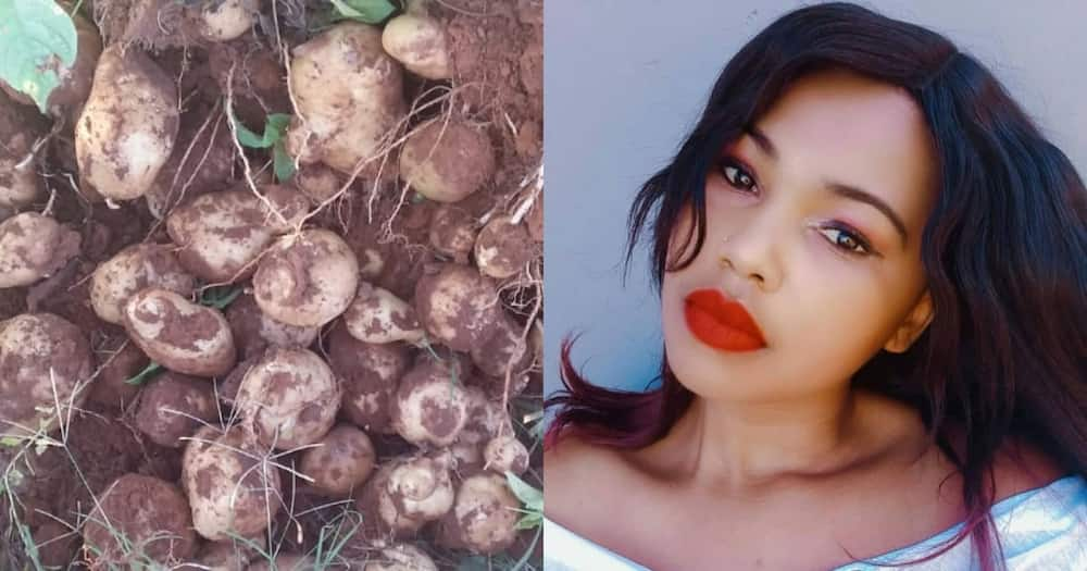 Unemployed South African woman finds joy in planting potatoes