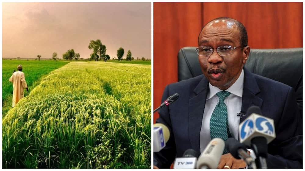 Flood disaster: Kebbi rice farmers urge CBN to suspend loan repayment till 2022