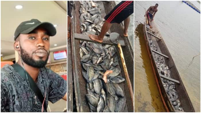 Fresh tilapia for weekend - Nigerian fisherman shares photos of canoe with new catches on Twitter, wows people