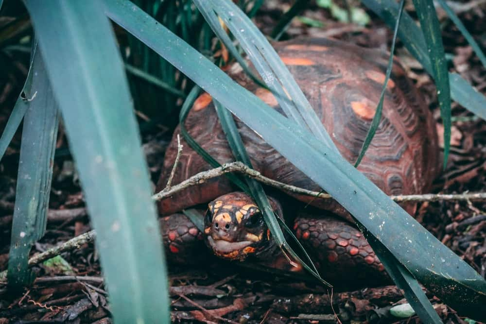 What are some cute tortoise names?