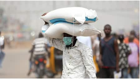 Dollar rise is to blame for the high cost of rice, President of Nigerian Rice Farmers, Aminu Goronyo says