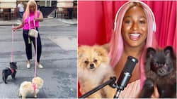 DJ Cuppy to give out N60k cash as her cute dogs Dudu and Funfun clock 6 months