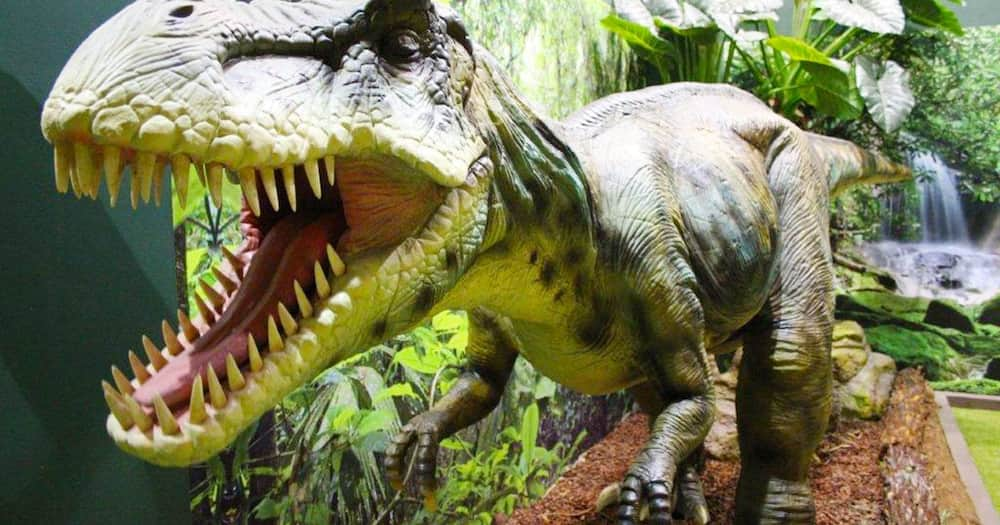 Woman Claims She Spotted a Baby Dinosaur Running Near Her Home