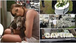 Dog owner spends about N2 million to give her late dog a beautiful burial (photos)