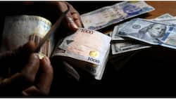 Forex ban: BDC operators to collect their licensing fee, N35 million deposit from CBN