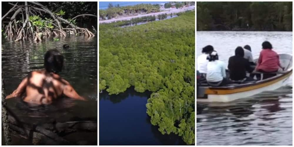 Papua mangrove forest where only women without clothes are allowed to enter