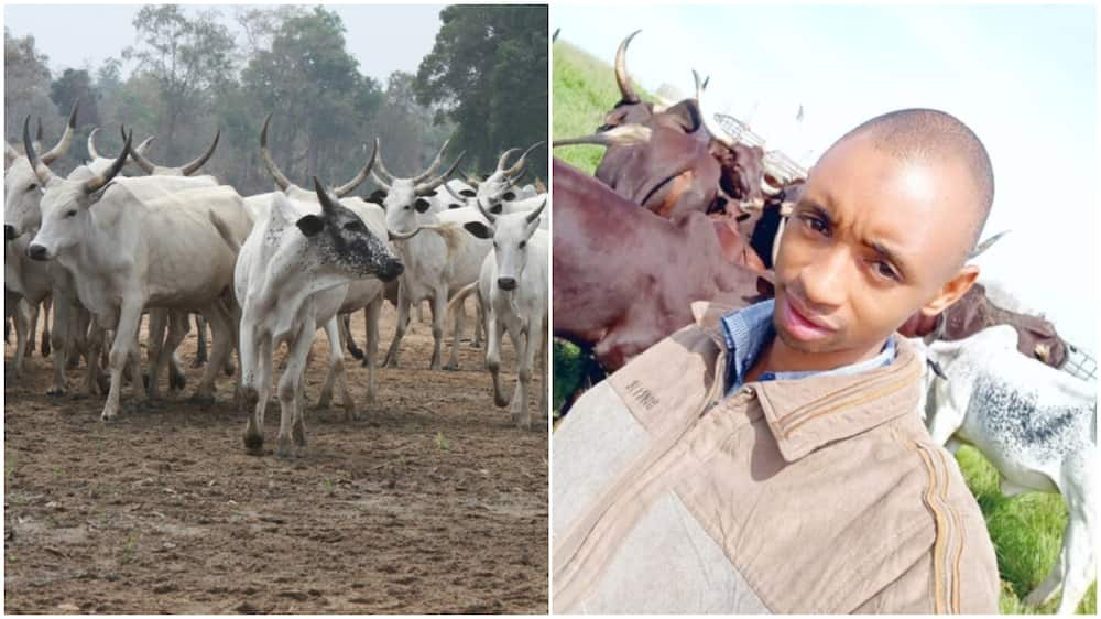 Adamu Dauda, from rearing cattle to a university lecturer