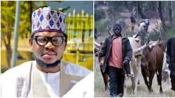 Cattle more valuable than oil and gas - Ex-presidential aspirant declares