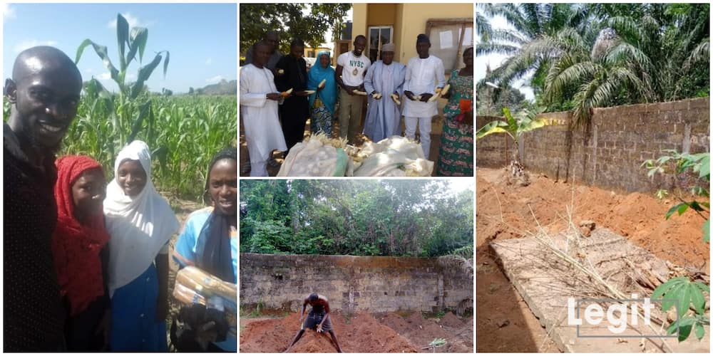 Chiemezie Ezeani: Another Nigerian Graduate who Has Taken Farming as a Full Time Occupation, Shares His Story