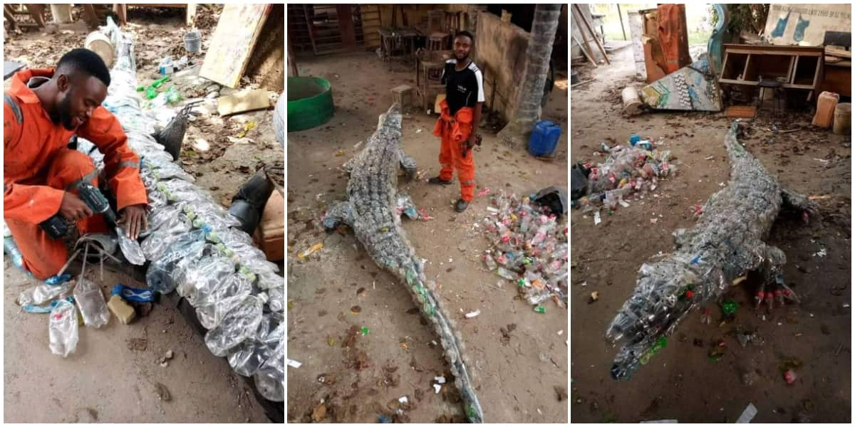 Young man converts plastic waste to crocodile, photos generate reactions