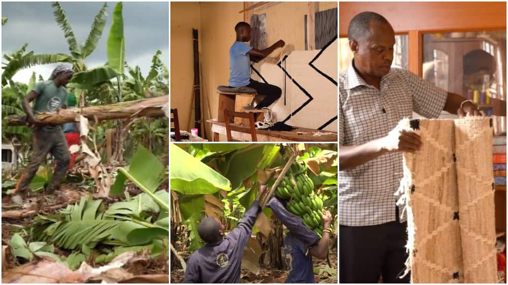 Company in Uganda turns banana stems into rugs, basket, other home materials, video drops