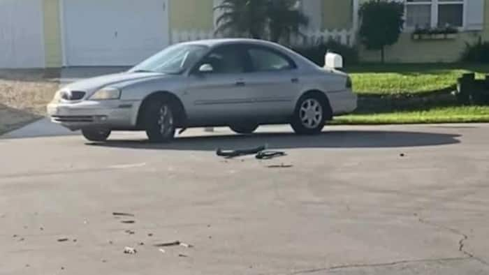 Drama as Dog puts car into reverse, drives in circles for almost 1 hour