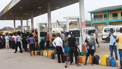 What NOIPOLLs survey reveal about the price of fuel in Nigeria