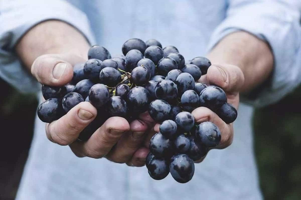 Instances of first fruit in the Bible with appropriate references