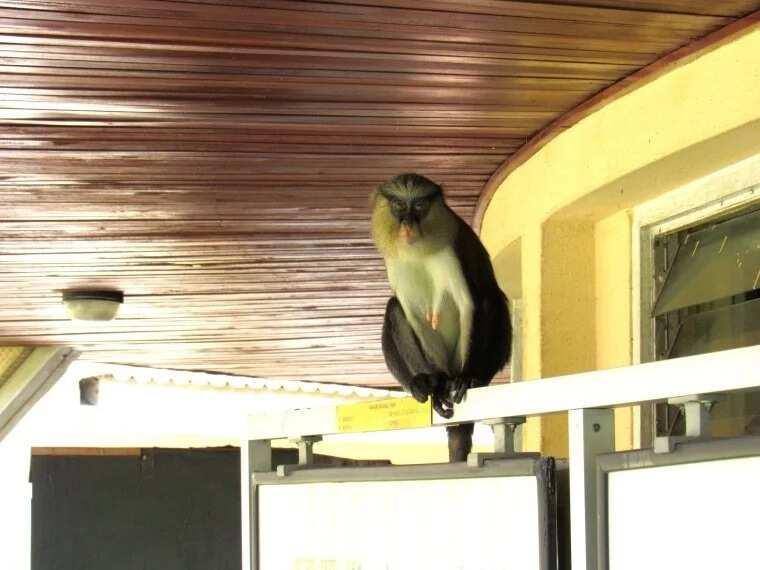 Lekki conservation centre animals