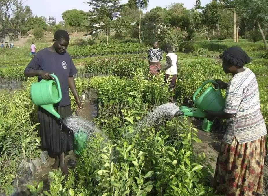Problems of agriculture in Nigeria and possible solutions