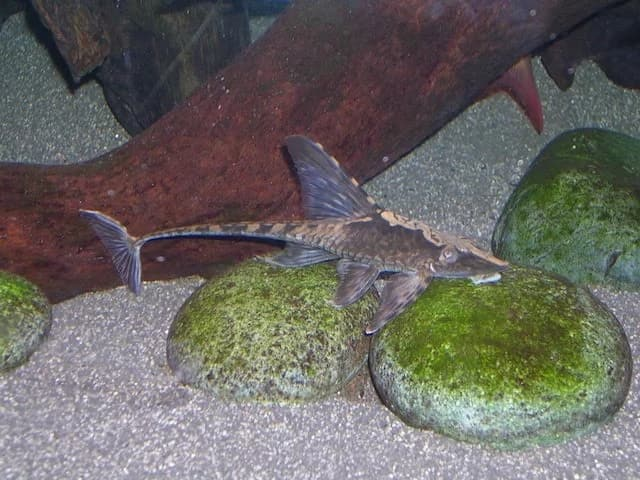 How to make catfish grow faster