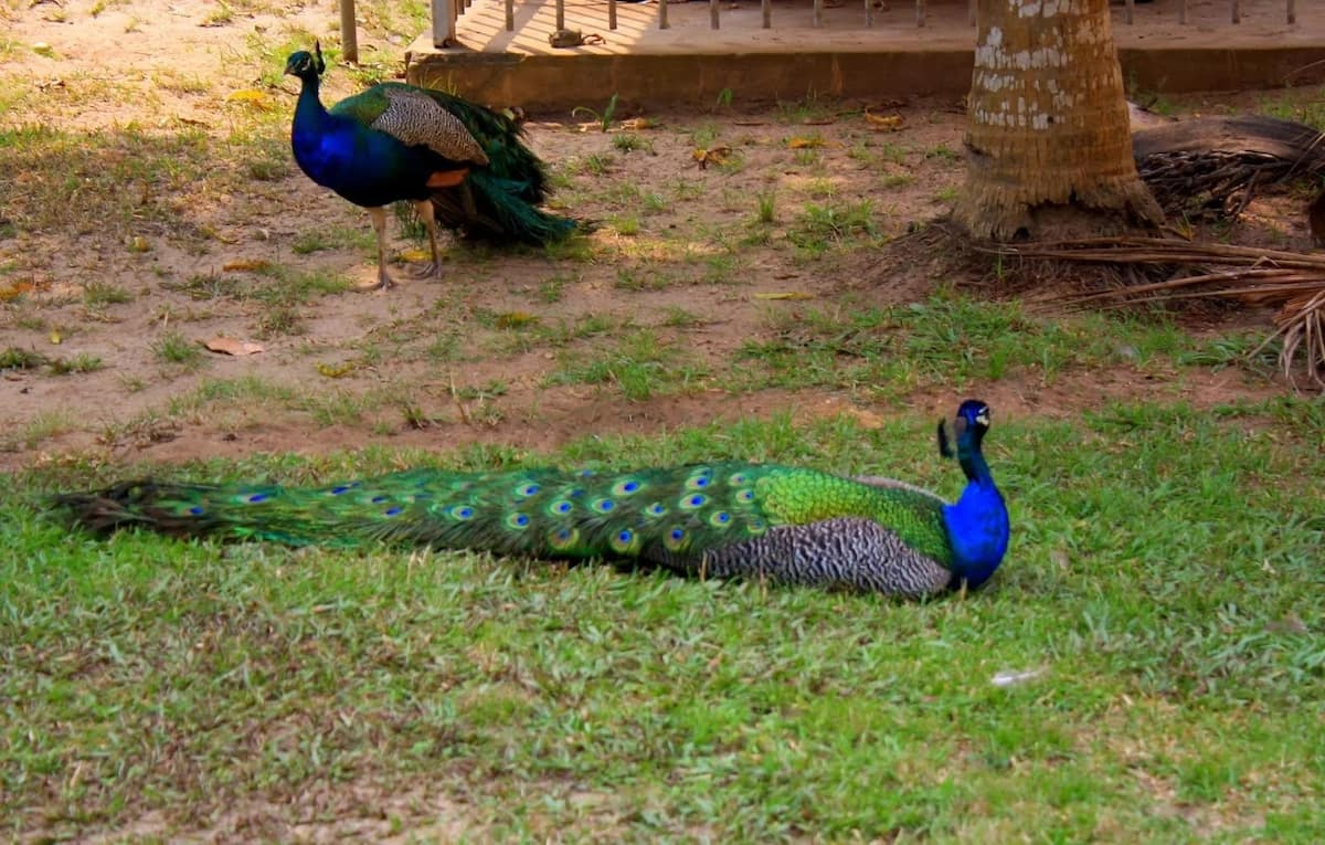 Lekki conservation centre birds