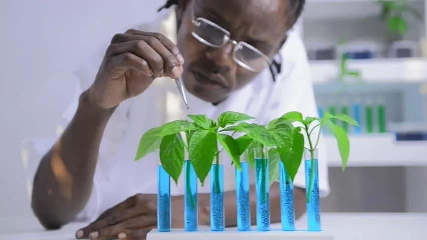 science and bitter leaf juice