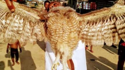 Owl tagged as 'terrorist' in Delta state is burnt to death (photos)