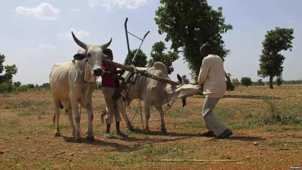 Nigerian central states
