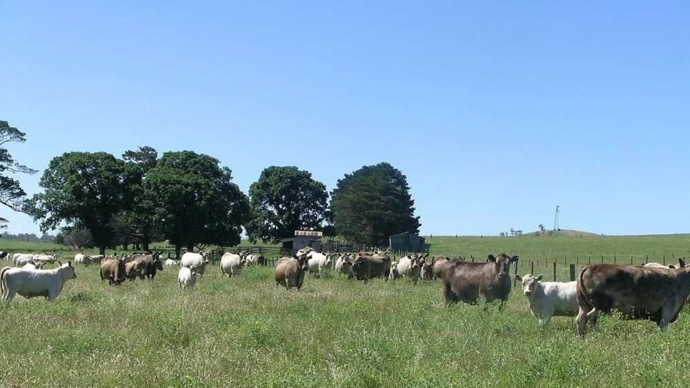 Advantages and disadvantages of pastoral farming ▷ Legit ng