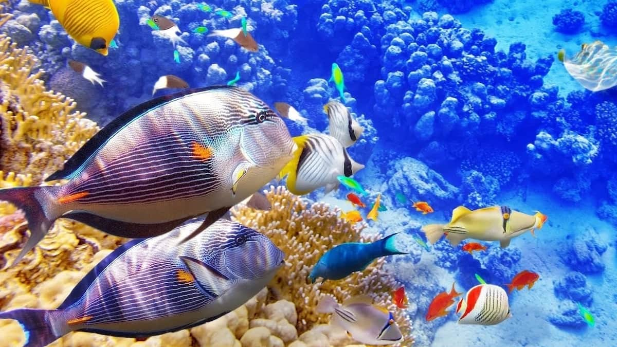 What do fish eat in the ocean?