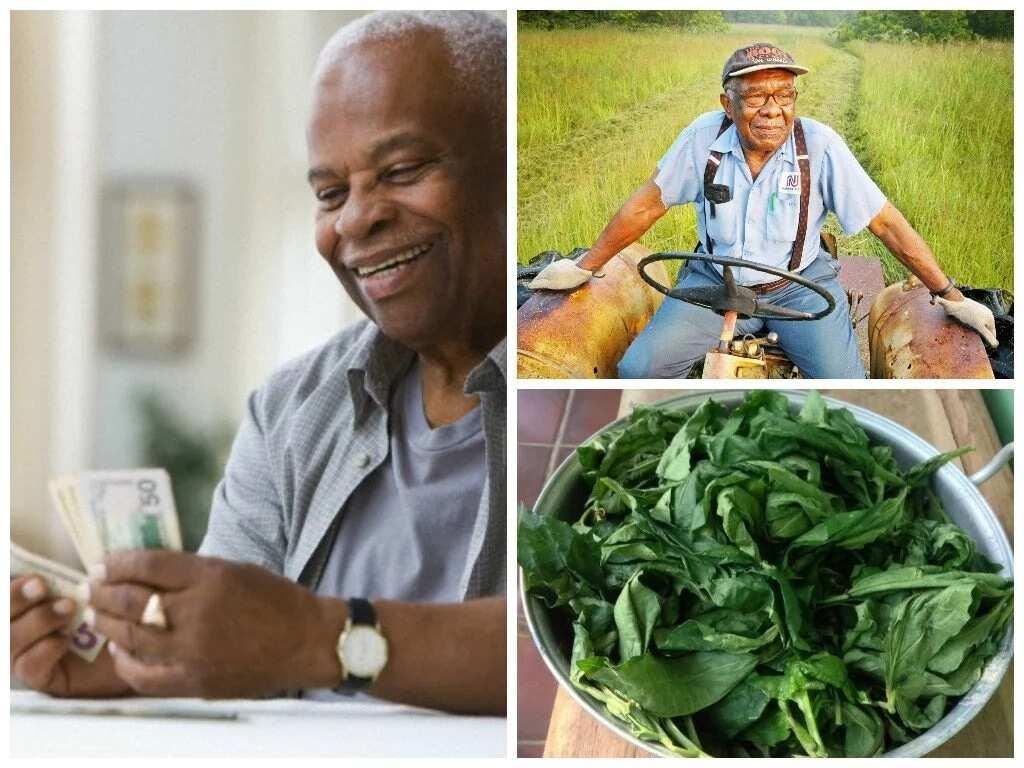 How to plant Ugu vegetable in Nigeria? ▷ Legit ng