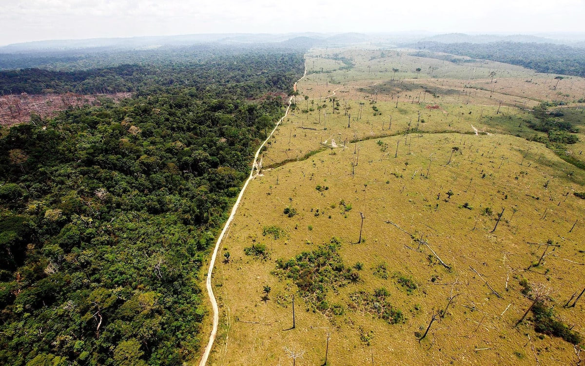 Deforestation in Nigeria and its implication on economy