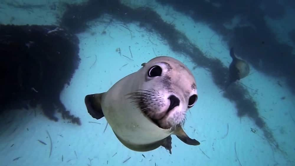 9 animals that live in water