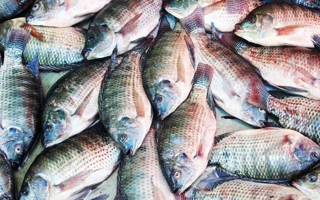 Fish farming business plan in Nigeria