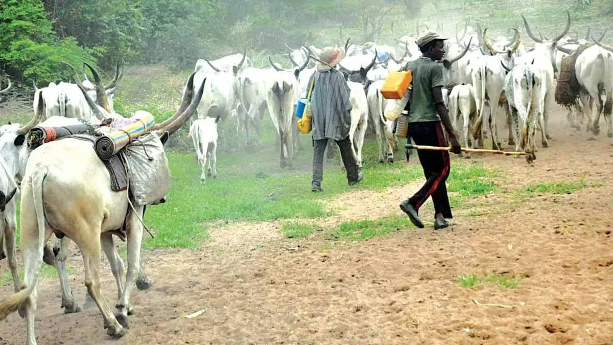 Ruga: Bauchi residents beg FG to abandon policy, focus on education, jobs - Legit.ng