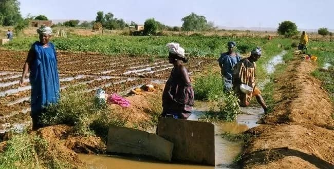 Types of farming systems in Africa