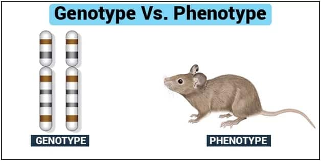 Types of genotype What are they